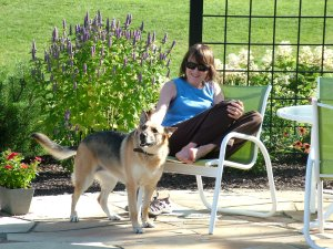 garden dog, German shepherd, trellis, custom trellis, bird bath, woman in garden, Master Gardener, resting in the garden