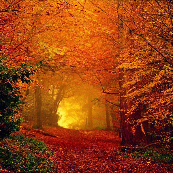 fall-colors-from-fb