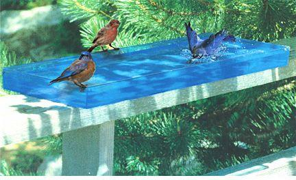 birds, bath, 3 birds, splash, water, view, window, summer, spring