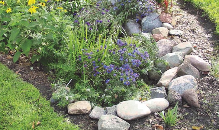 rain garden, rocks, drainage, flooding, native plants, volunteer